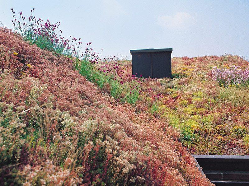 Matériaux pour toiture verte BAUDER en vente chez Glaesener-Betz